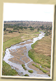 tarangire river - tarangire national park
